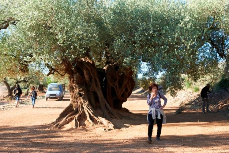 el olivo iciar bollain