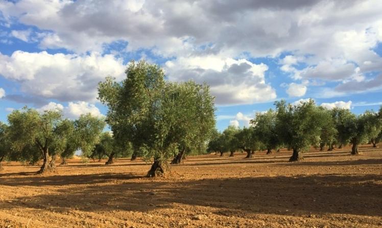 olivar-e-secano-en-guadamur