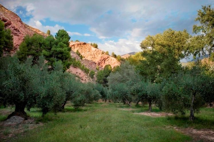 olivar dehesa sabina