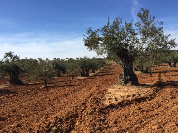 seguros olivar