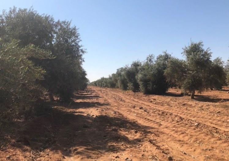 vilar-olivar