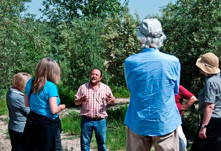 visita a olivar