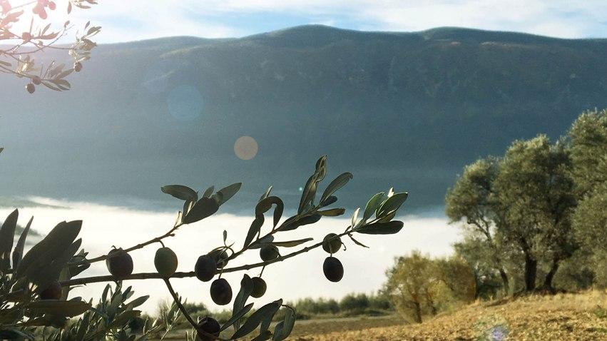 OLIVARES Valle de Barcedana
