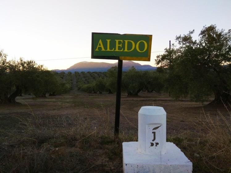 amanece-en-el-olivar